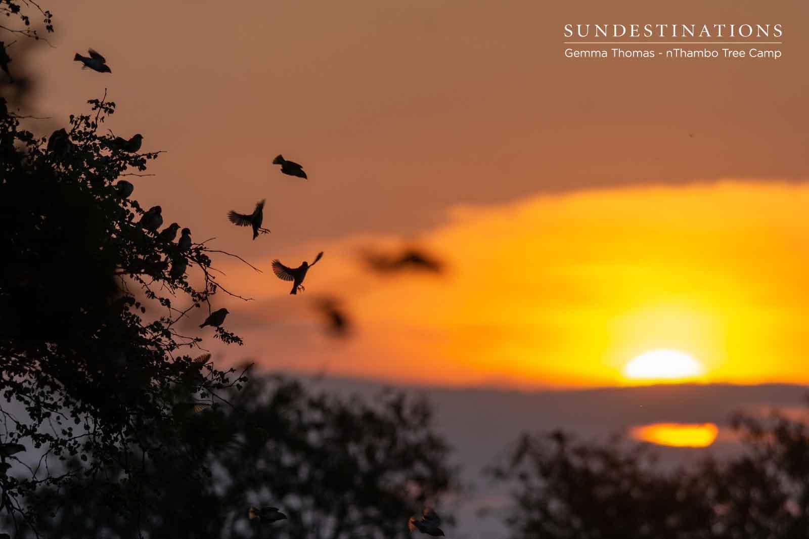 nThambo Birds at Sunset