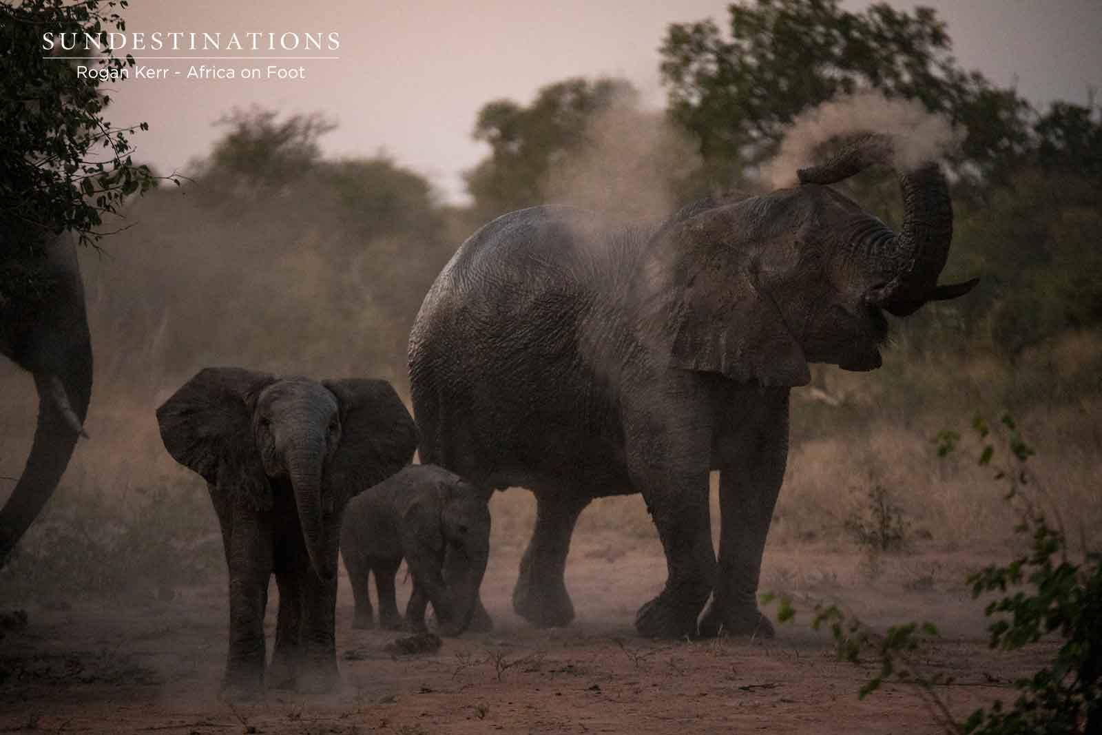 Dust Bath at Africa on Foot