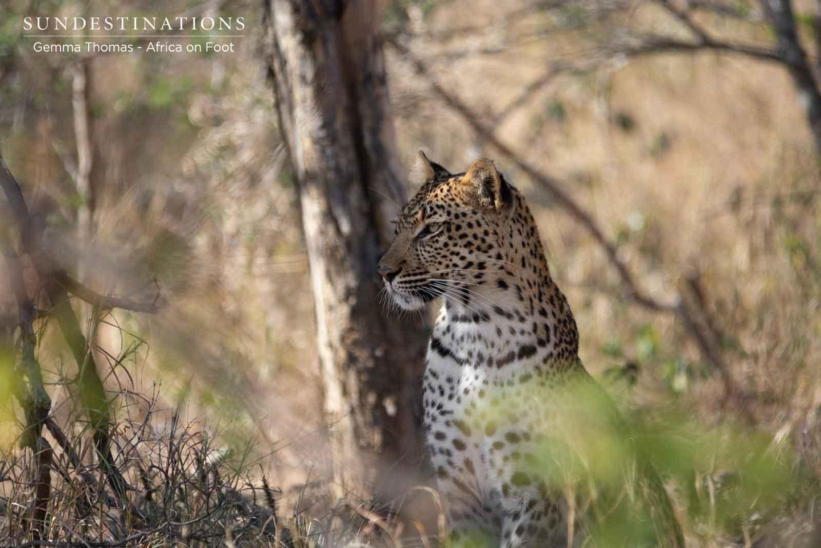 Nyeleti the Leopardess