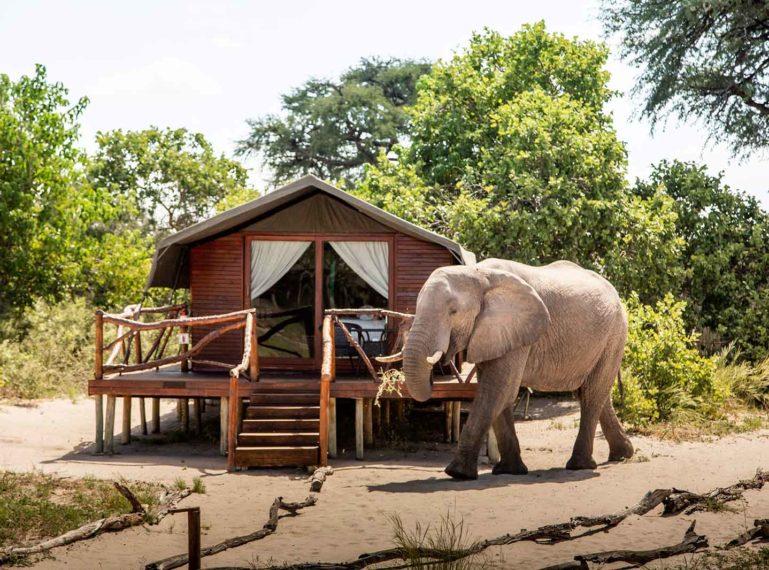 Camp Savuti is a Rare Find in Botswana