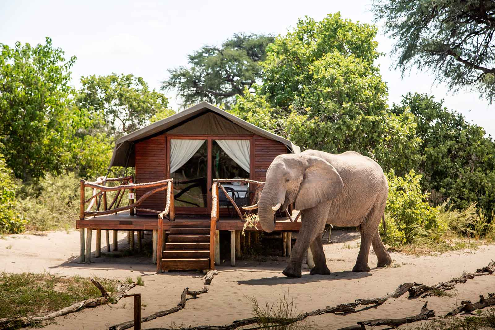 Elephant in Front of Accommodation