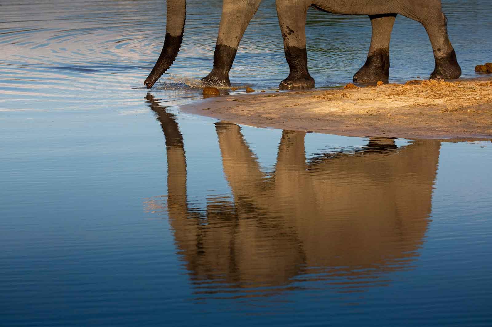 Camp Savuti Elephants
