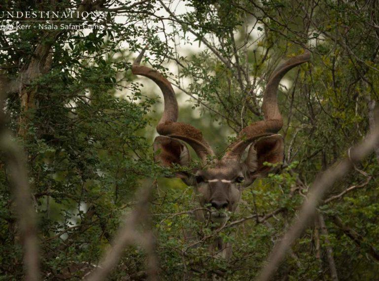 Nsala Safari Camp : Exclusively wild