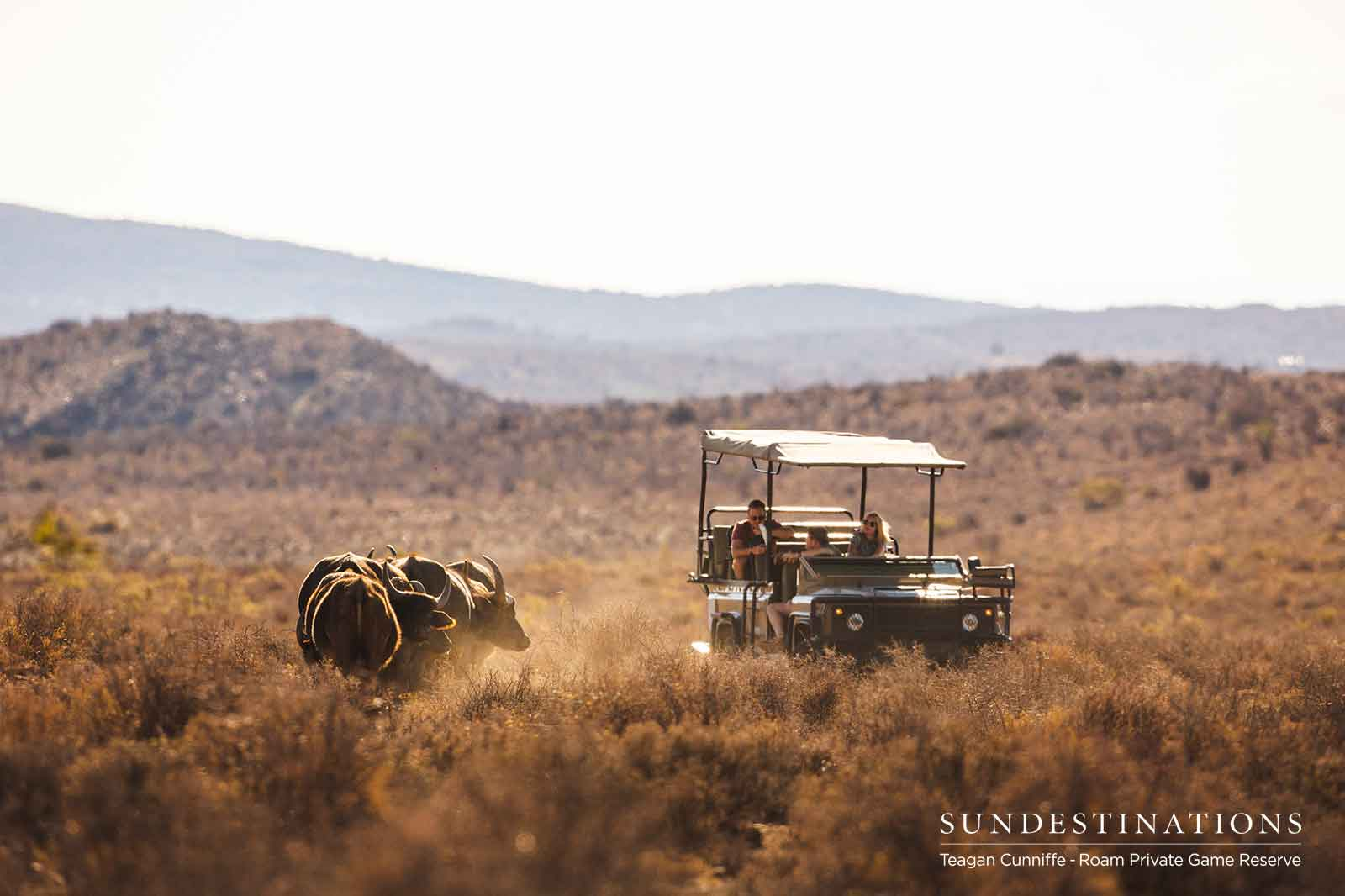 Visual Update from the Karoo's Roam Private Game Reserve