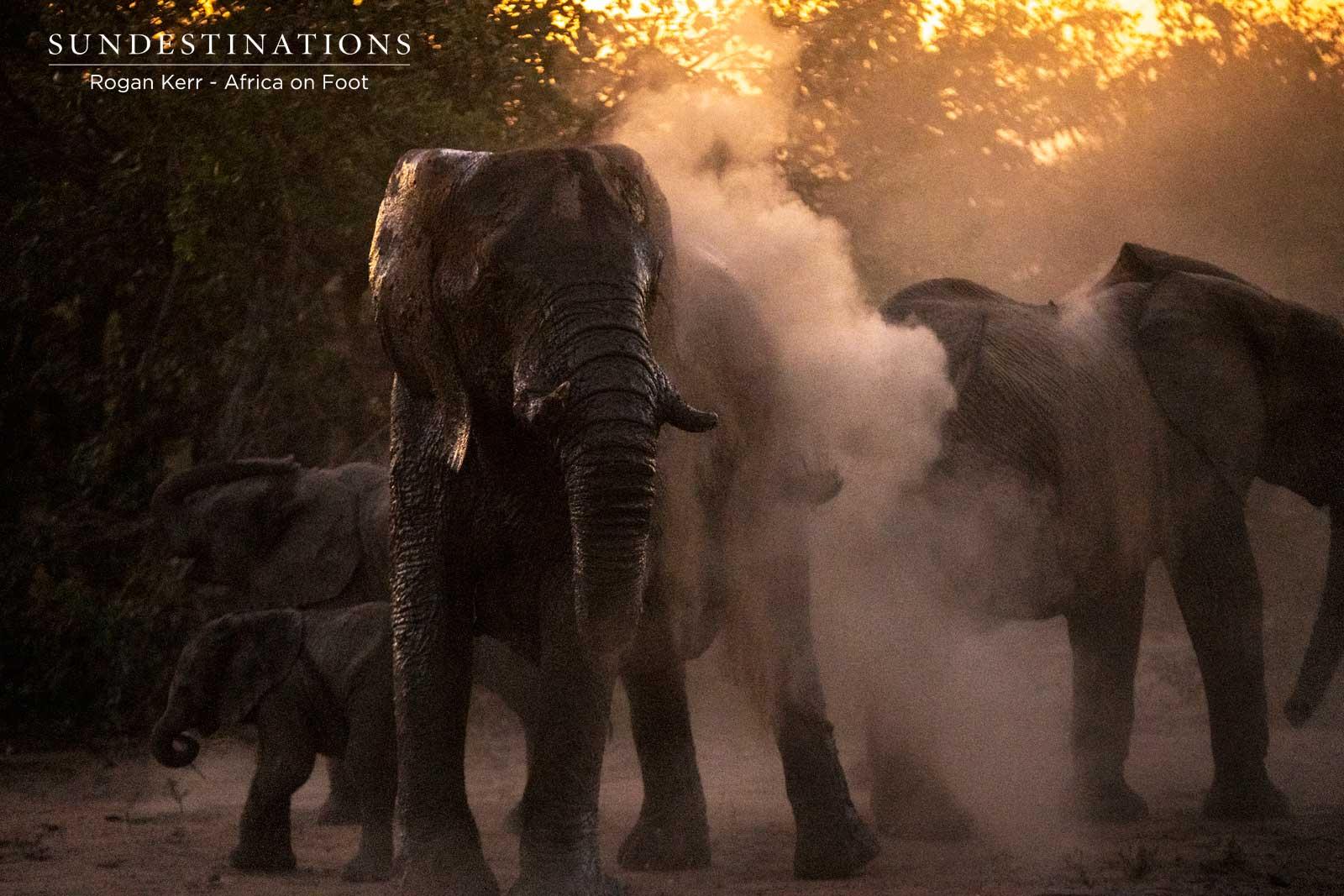 Elephant Herd in the Dust