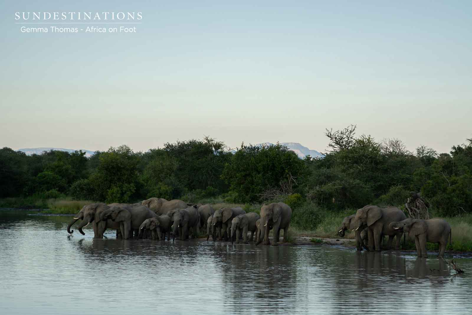 Elephant Herds at the Waterhole
