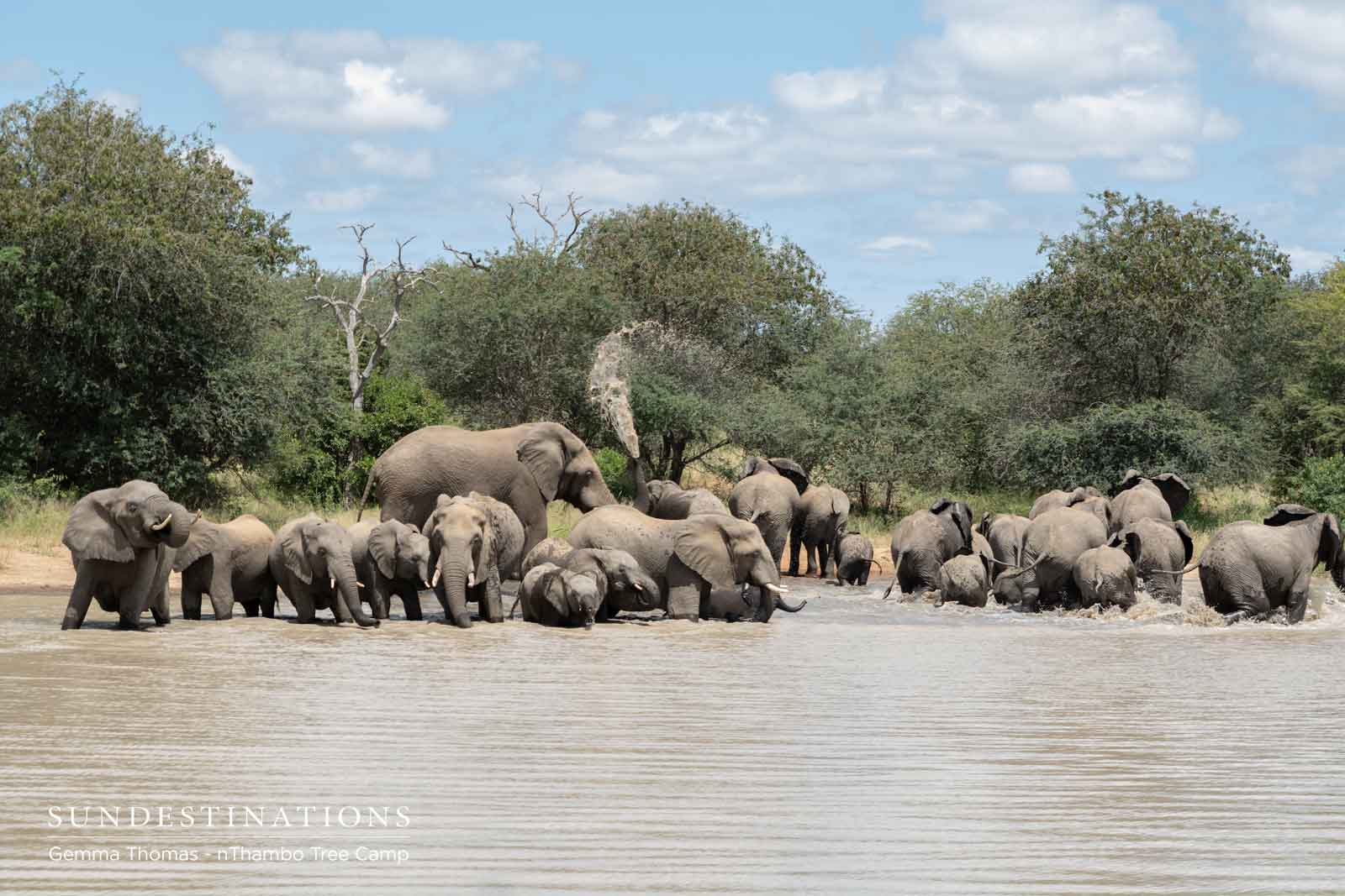 Elephants at nThambo Tree Camp