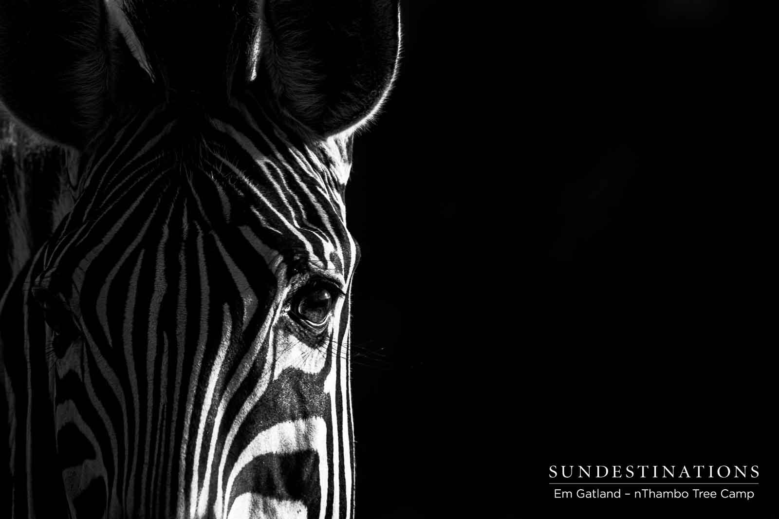 Zebras at nthambo Tree Camp