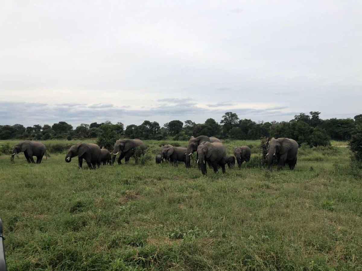 Elephants Umkumbe