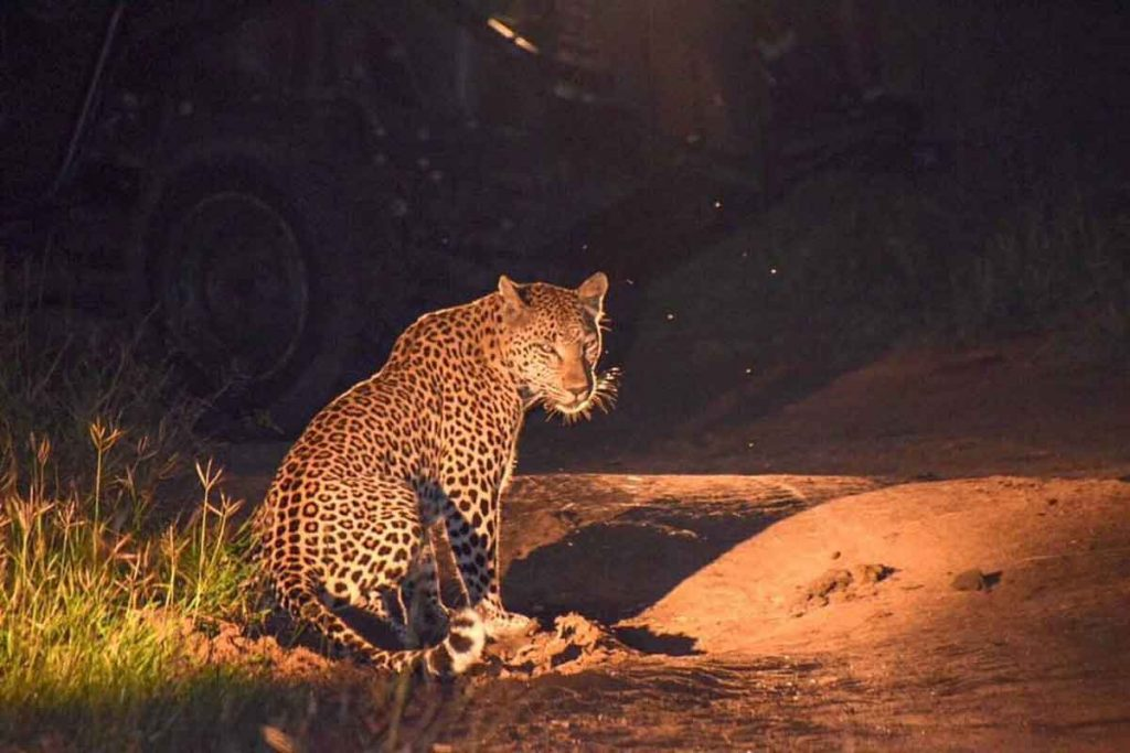 Umkumbe Safari Lodge Leopards