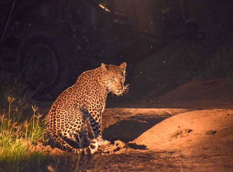 #GuestSafariReview : Miriam's Wildlife Dreams Come True at Umkumbe Safari Lodge