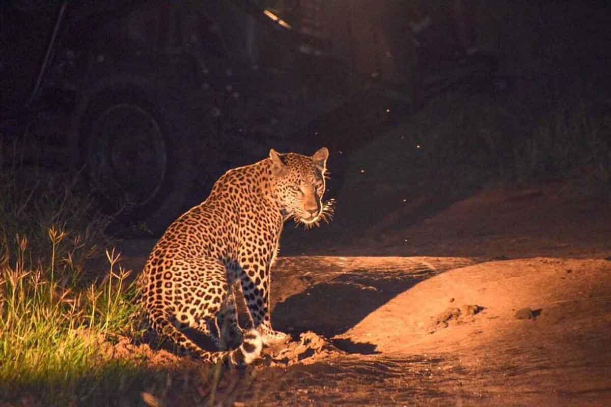 Umkumbe Safari Lodge Leopards
