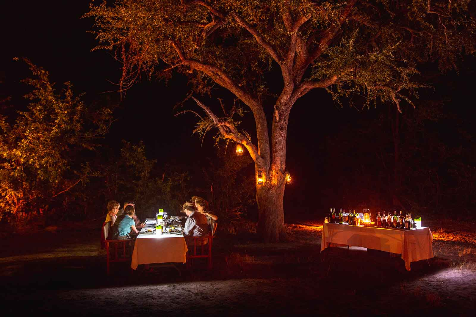 Dinner Under the Canopy of Trees