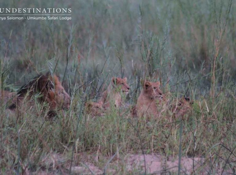 The Prowling Predators of Umkumbe Safari Lodge