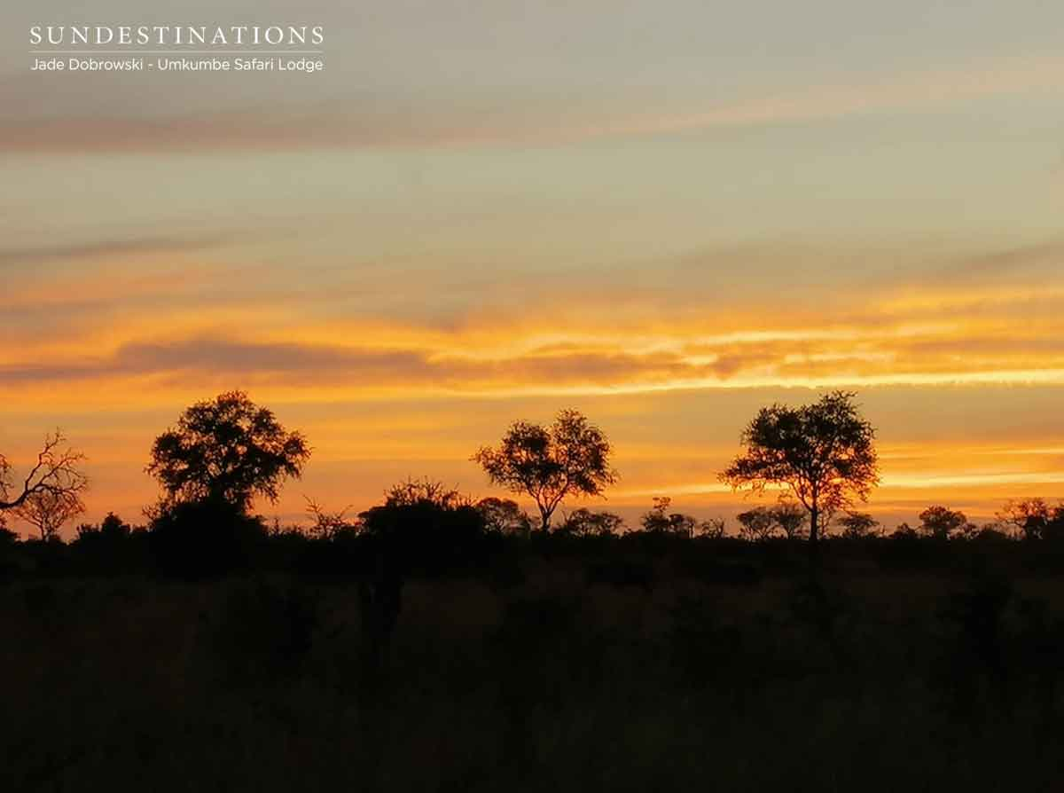 Sunset in Sabi Sand