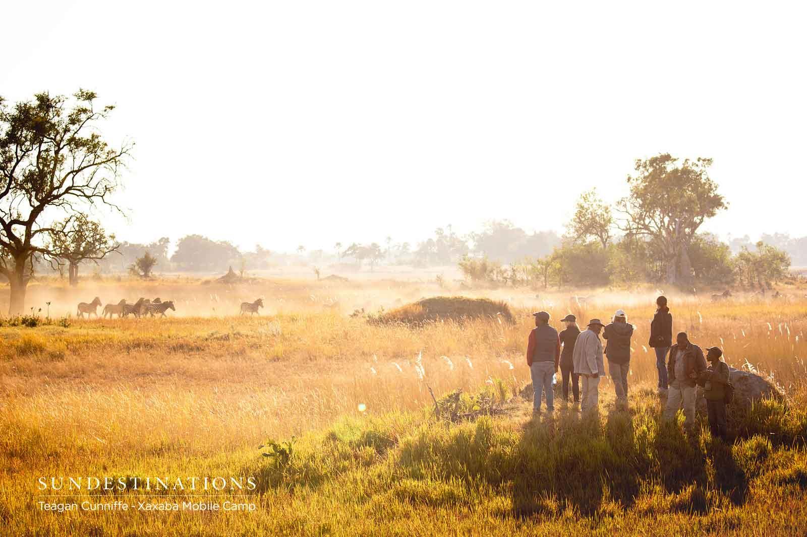 Xaxaba Walking Safari