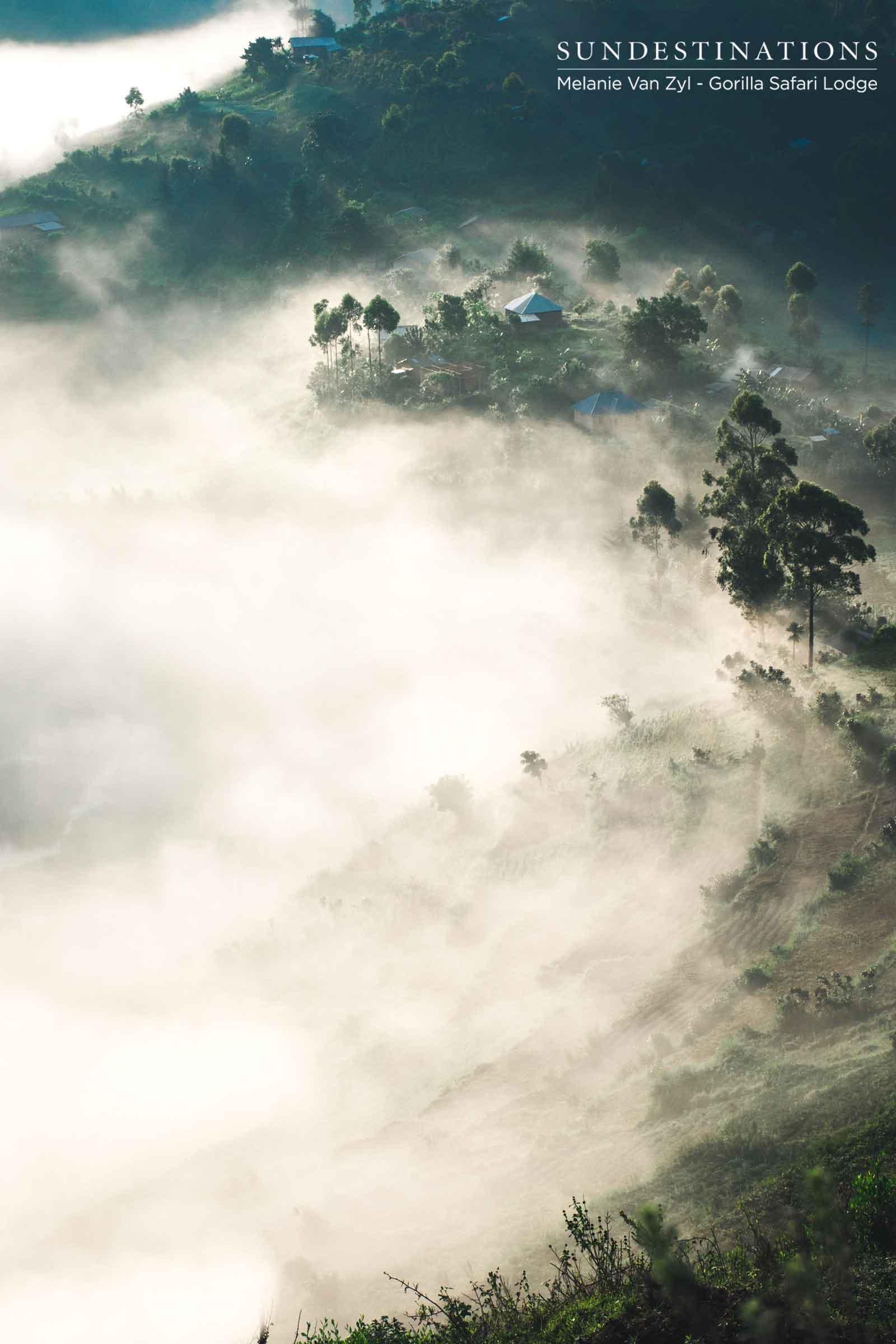 Gorillas in the Misty Landscape