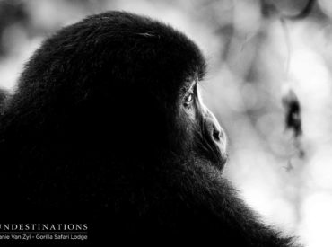 Uganda is one of the last places on earth to see endangered mountain gorillas in their natural forest habitat. You've booked the bucket-list wildlife experience of a lifetime, but a visit to these iconic creature requires a walk on the wild side – into the African jungle. It's named the Bwindi Impenetrable Forest National Park […]