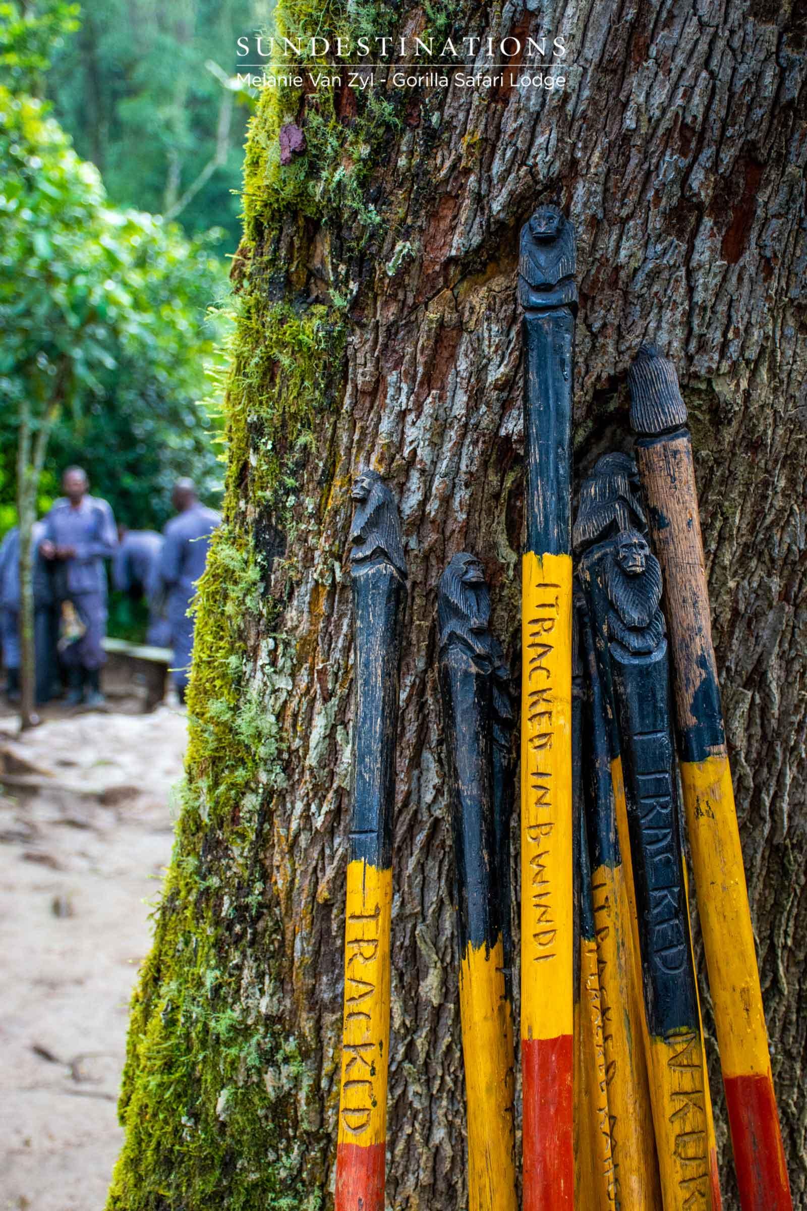 Gear for Gorilla Trekking in Bwindi
