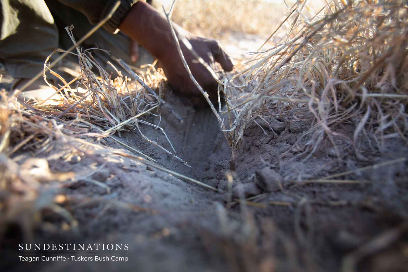 Making Fire with the Bushmen