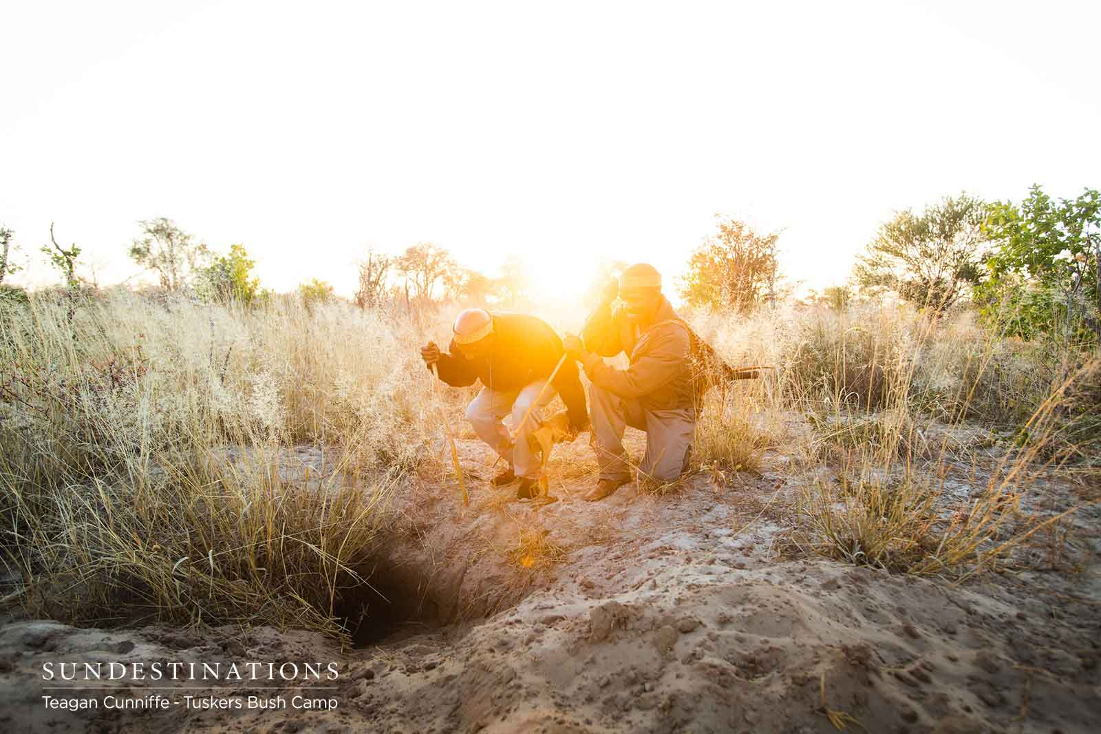 Morning Walks with Bushman of Tuskers