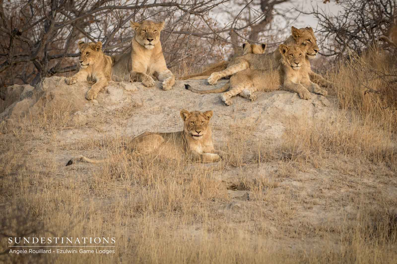 Kudyela and Cubs at Ezulwini