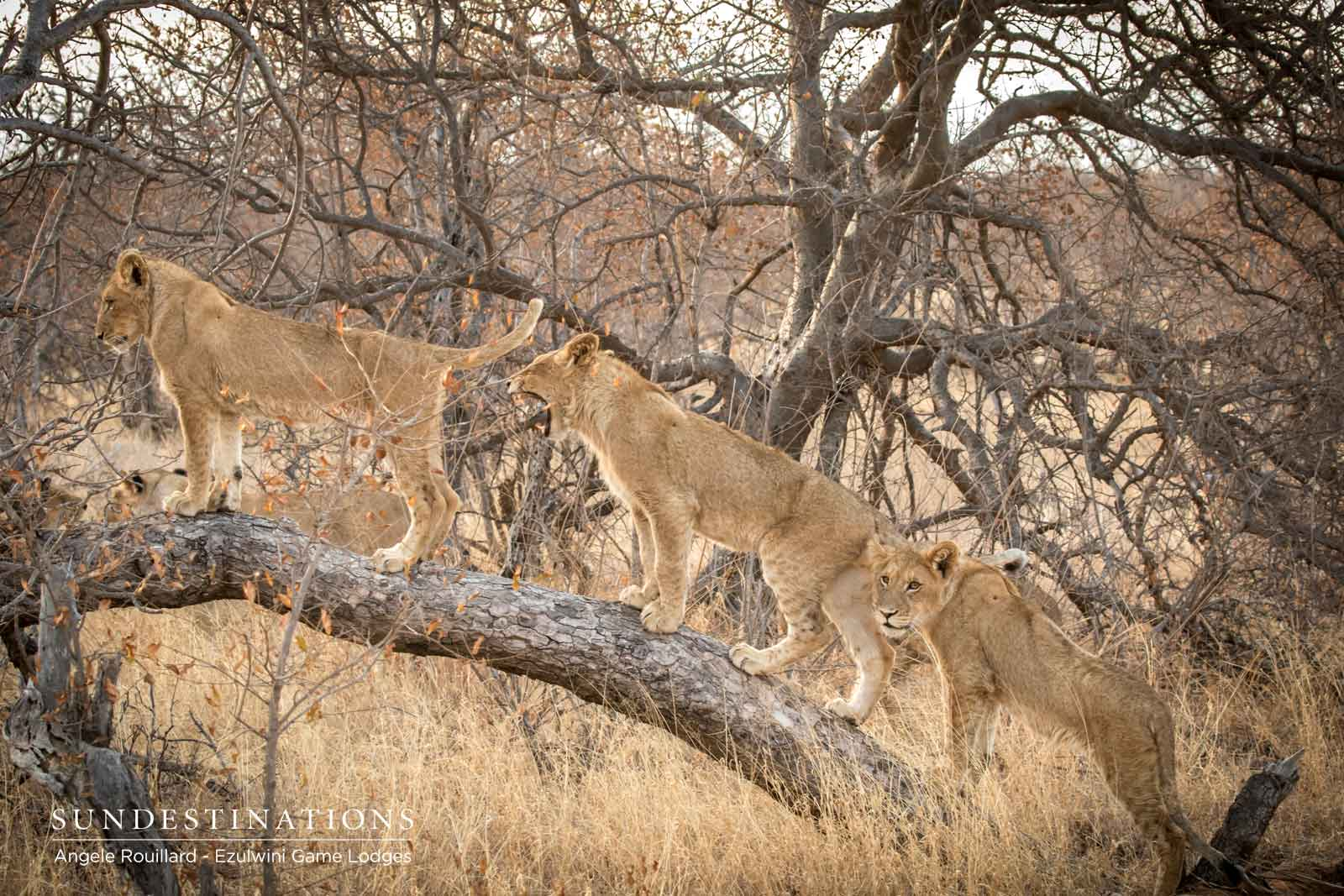 Kudyela Cubs in Procession