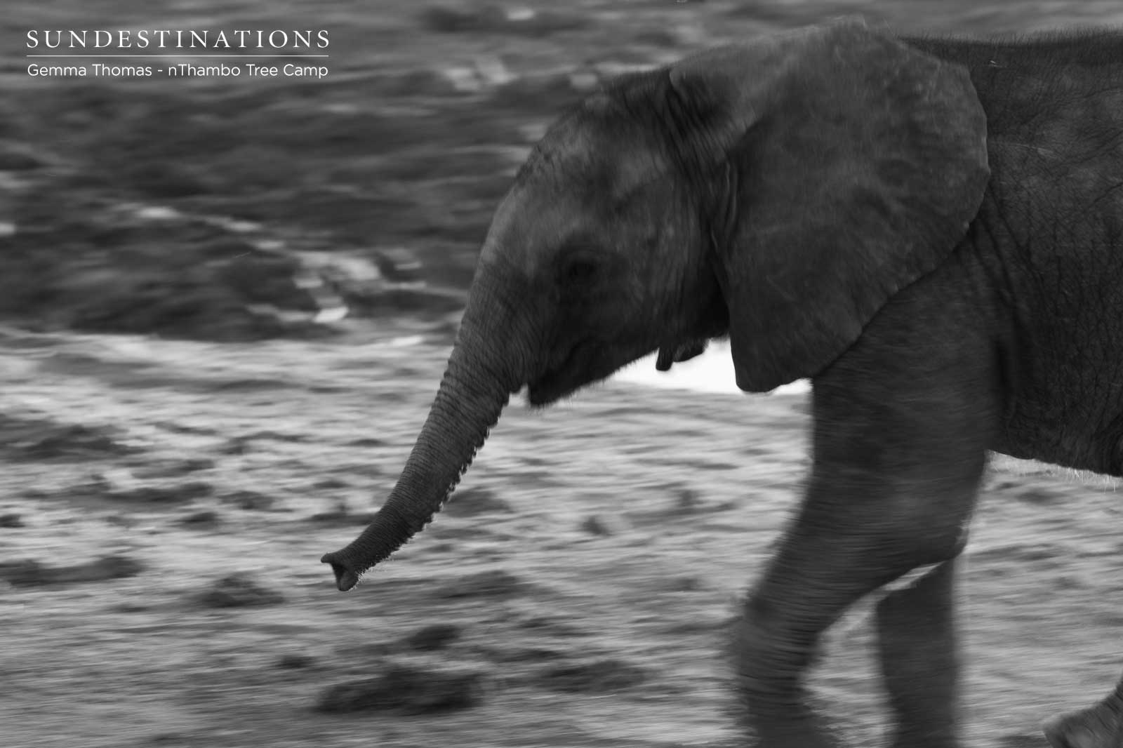Elephant Calf at nThambo
