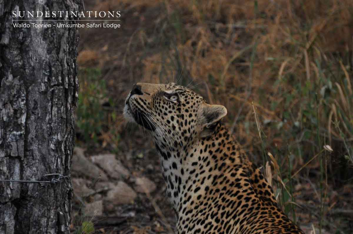 Game Drives at Umkumbe : A Visual Journey with Our Safari Guides