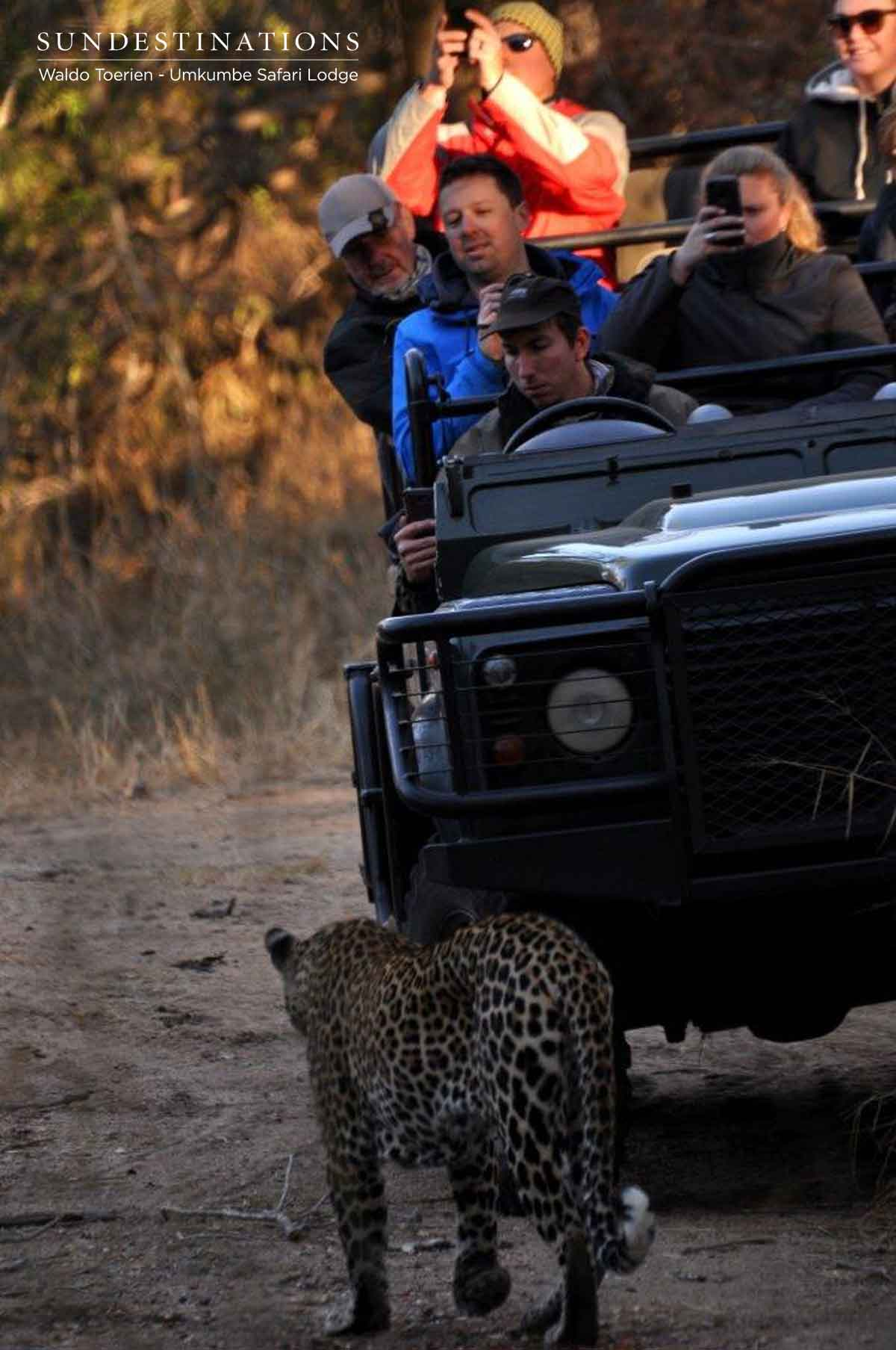 Leopard Nweti