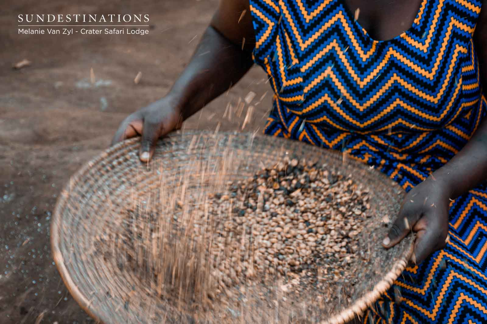 Dried Coffee Beans in Uganda