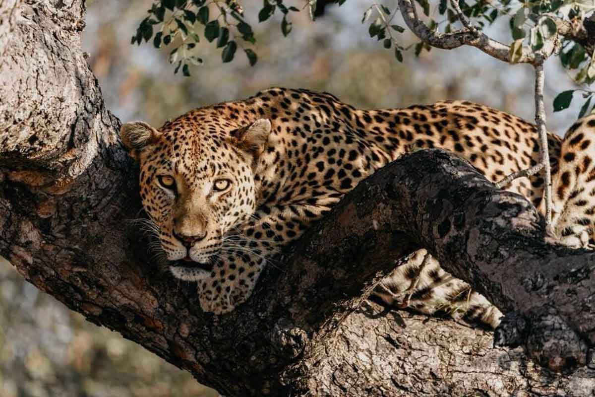 #GuestSafariReview : Megs Donati Visits nThambo Tree Camp