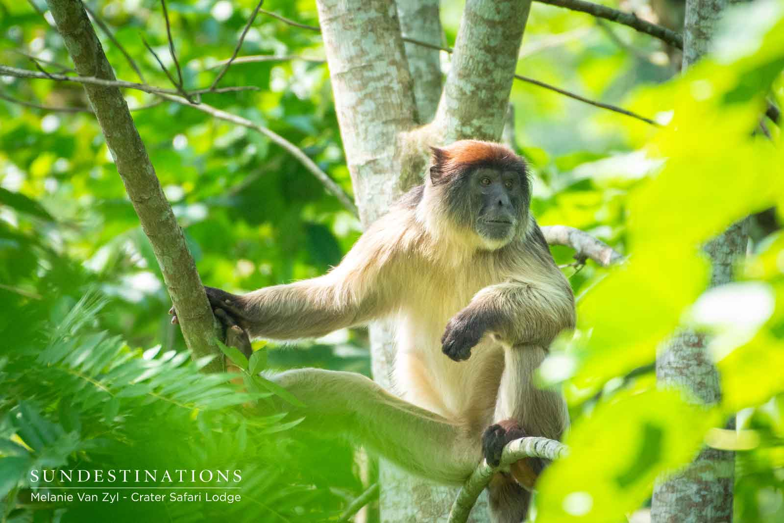 Crater Safari Lodge Monkeys