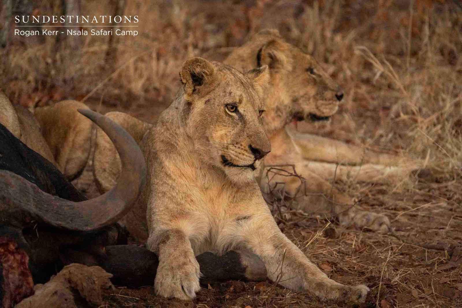Nsala Western Pride of Lions