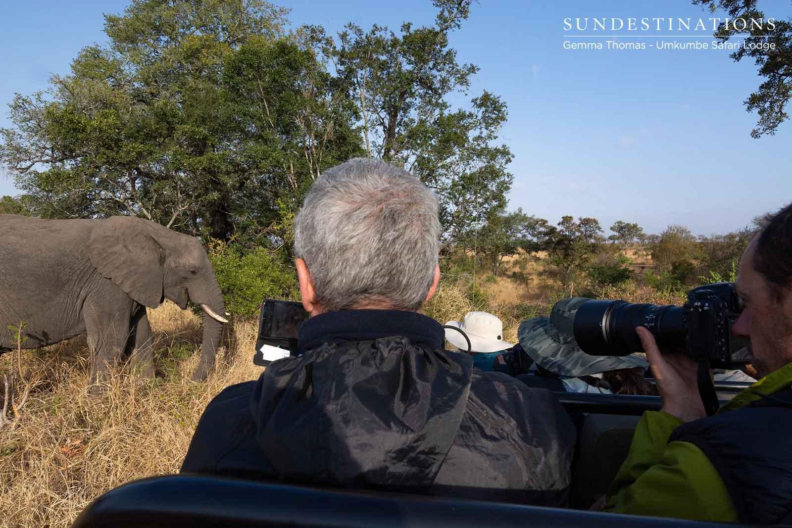 Elephants at Vehicles