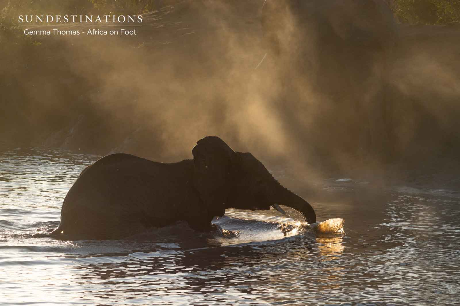 Africa on Foot Elephants Waterhole