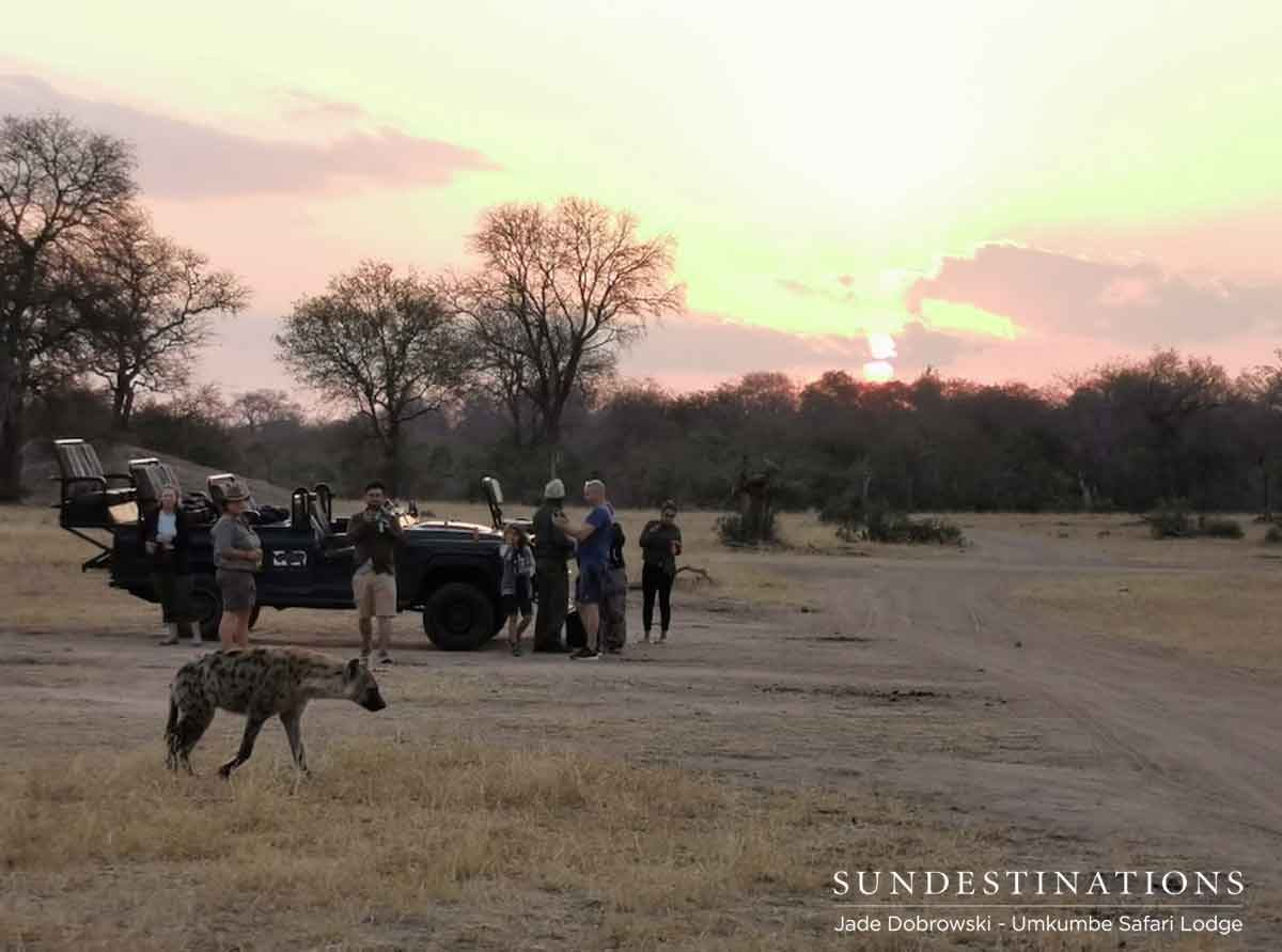 Hyena at Sundowners