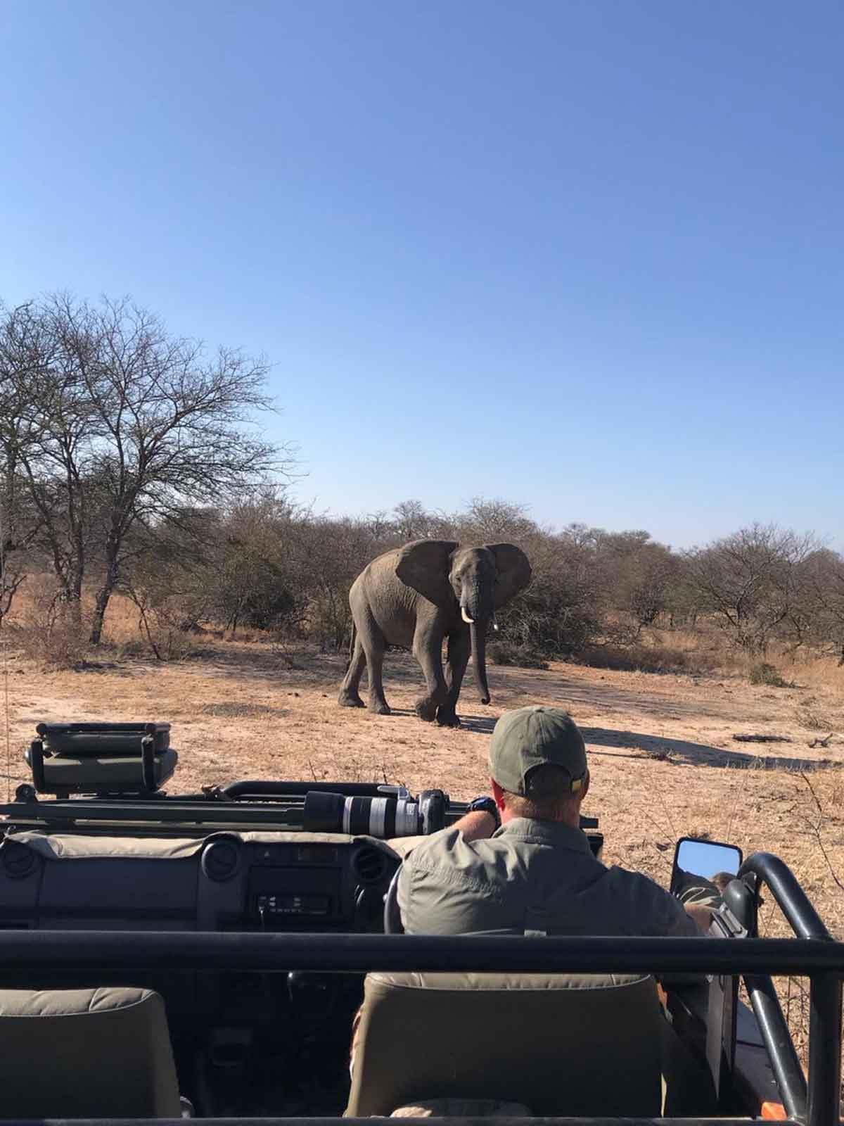#GuestSafariReview Elephant