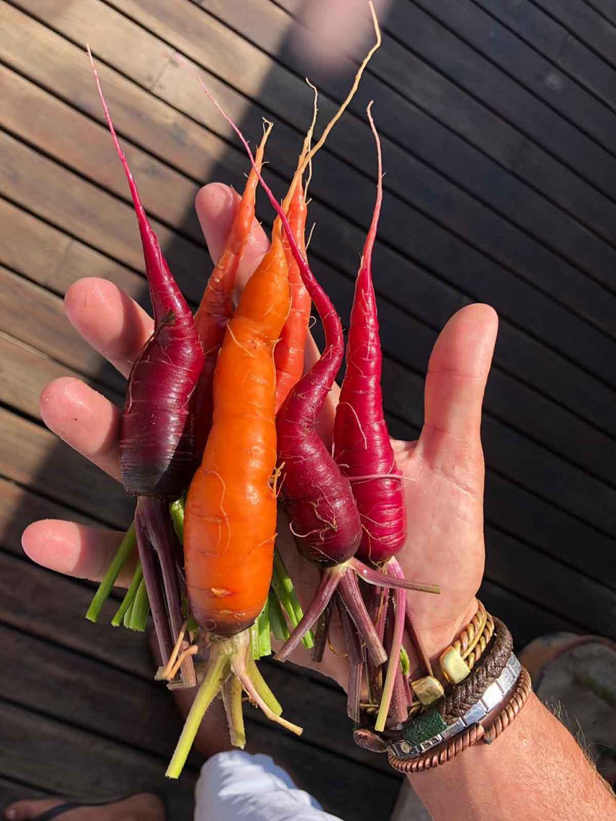 Sava Dunes Carrots
