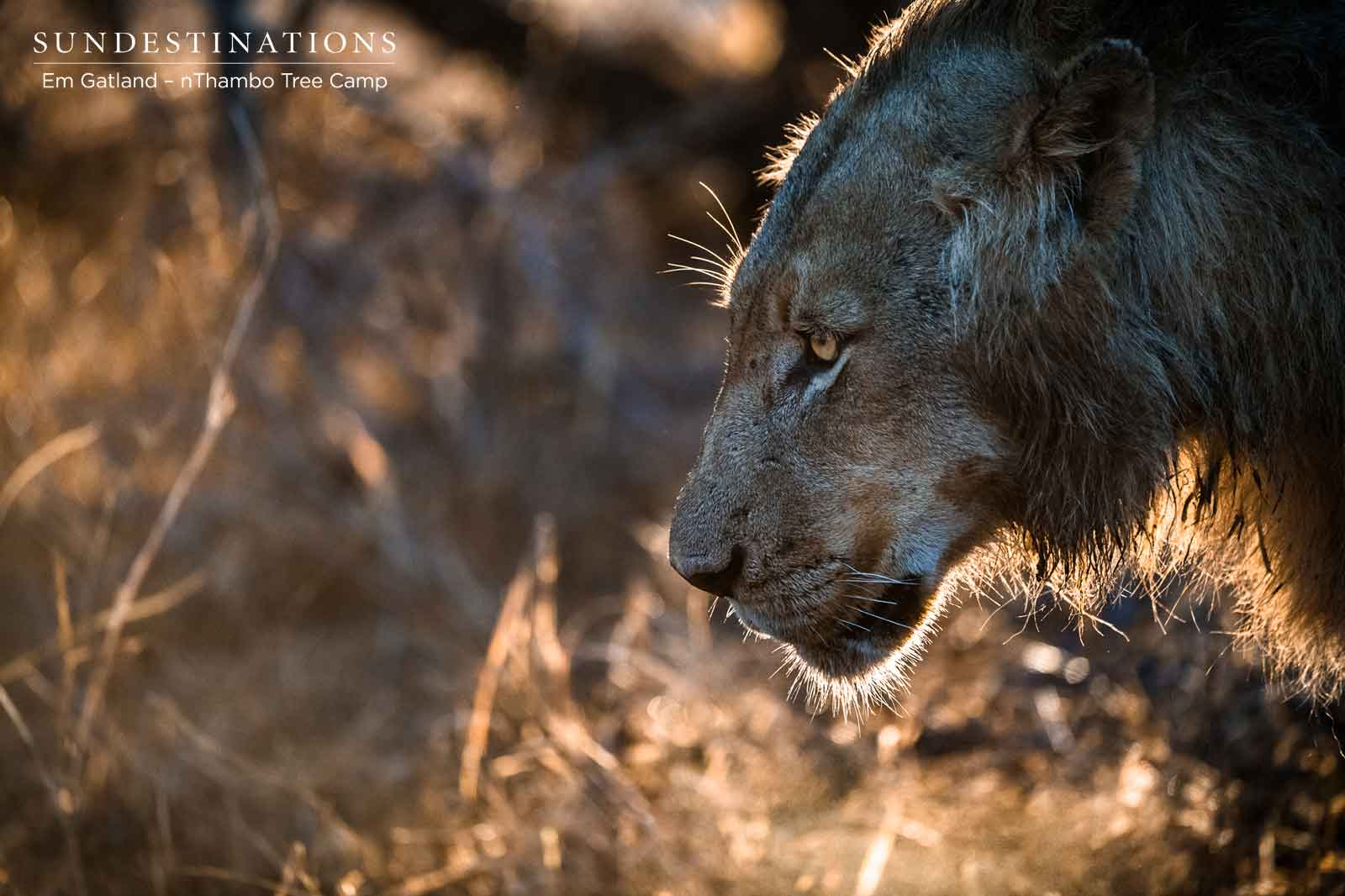 nThambo Lions Face