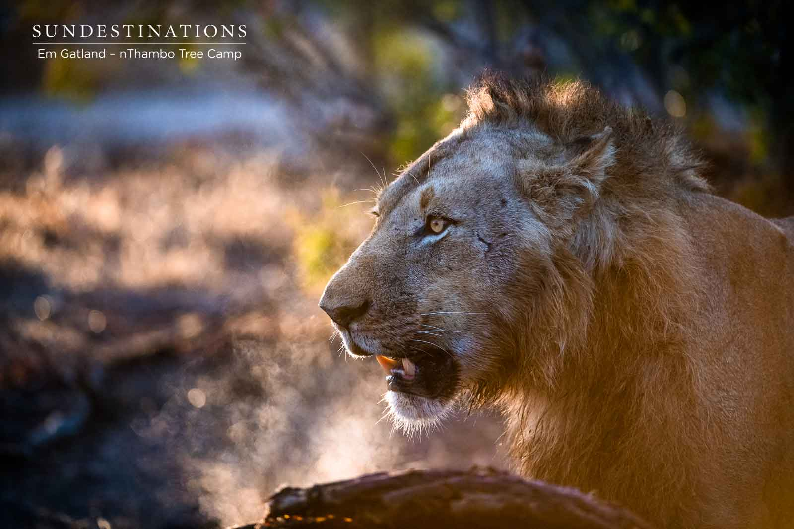 nThambo Lions Klaserie