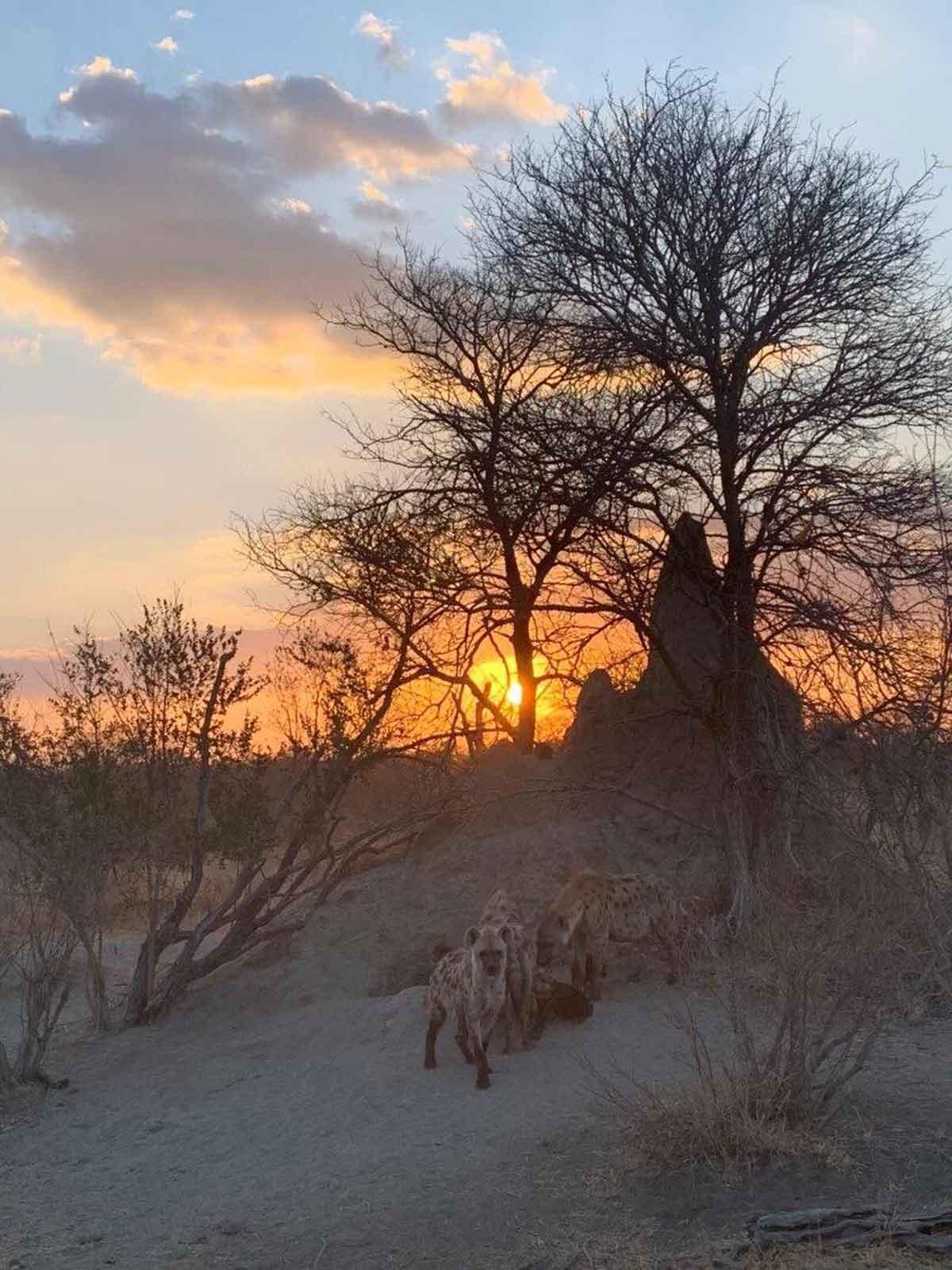 nThambo Hyenas