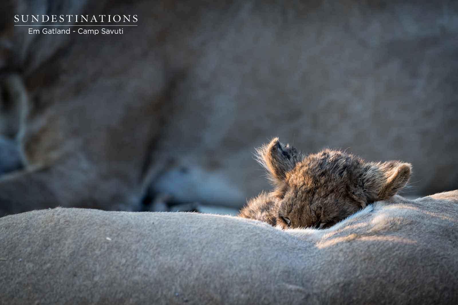 Lion Cubs of Savuti