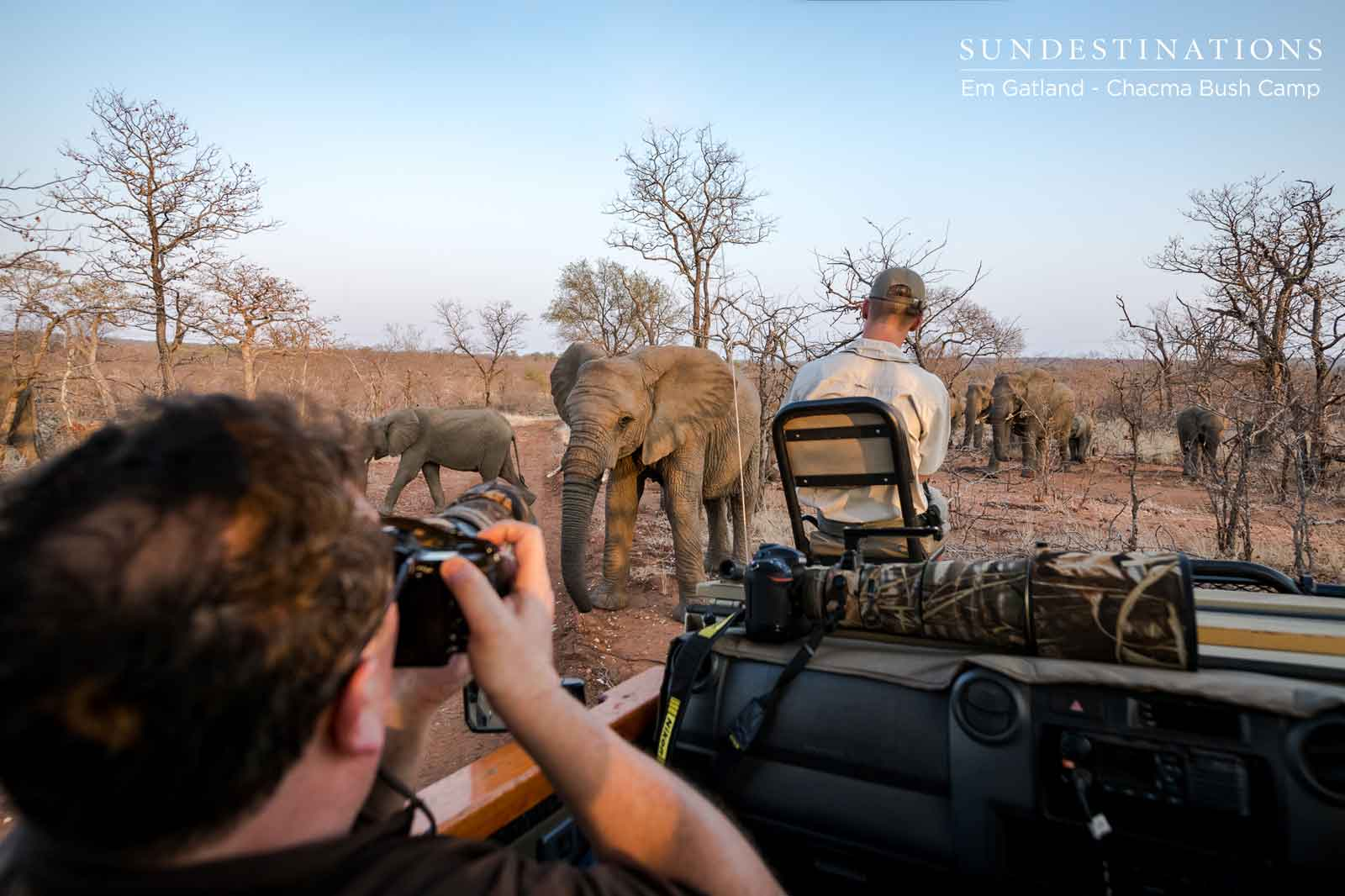Photographing Elephants on Game Drive