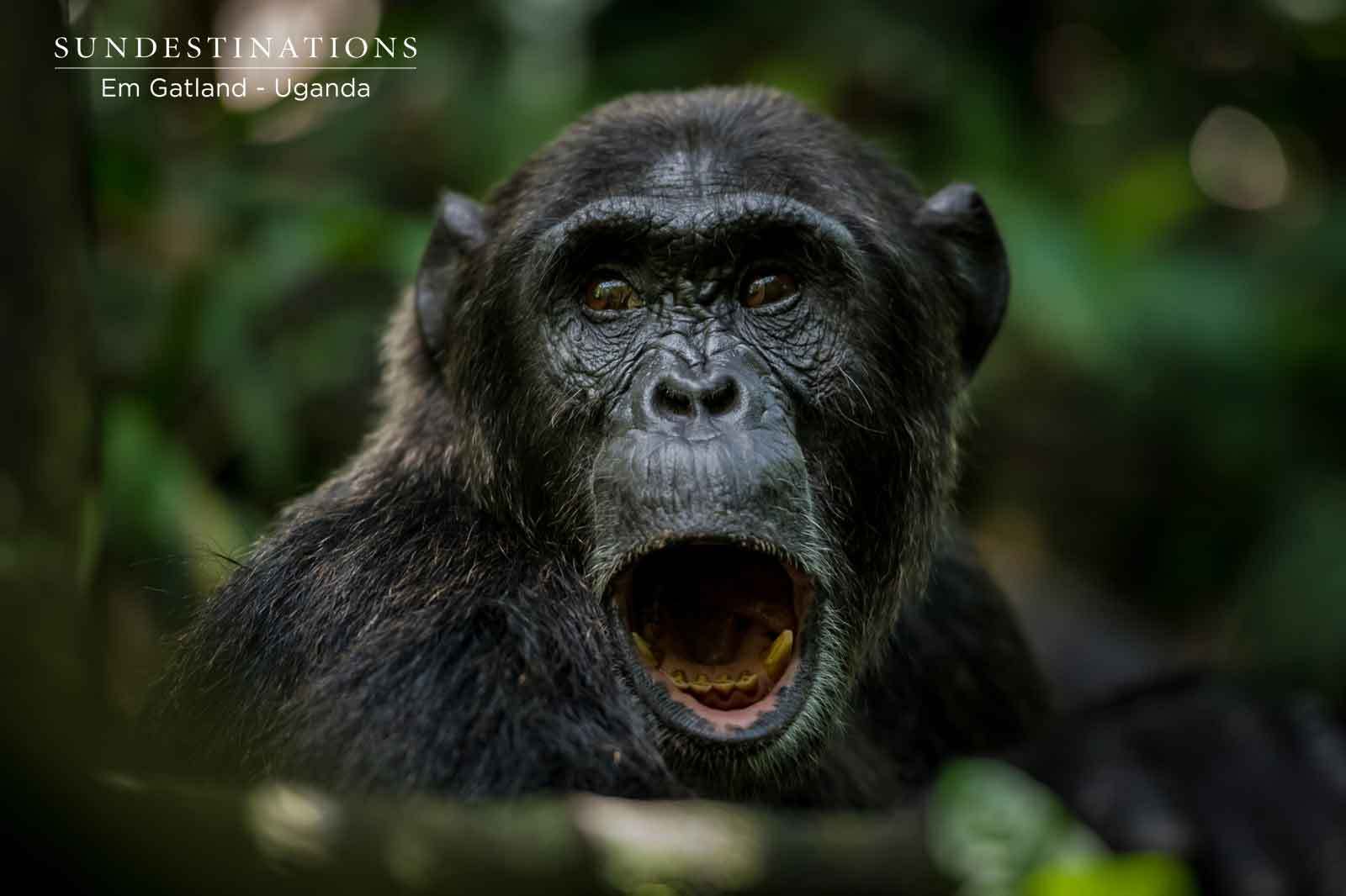 Kibale Forest National Park : Ape Town