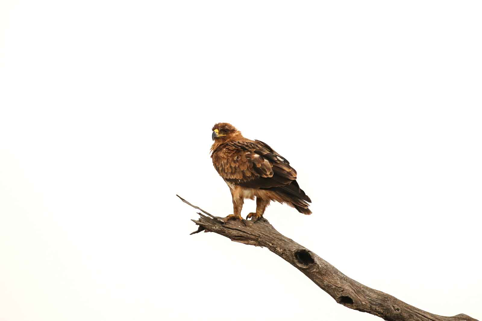 Ezulwini Birds of Prey