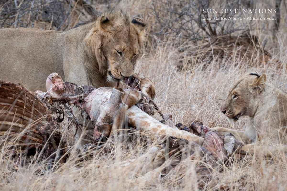 Vuyela Coaltion of Lions