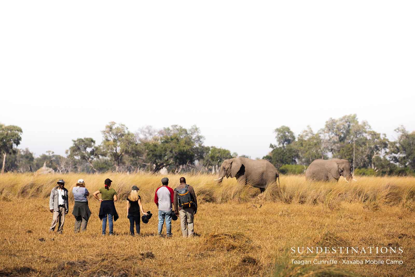 Walking Safari at Xaxaba