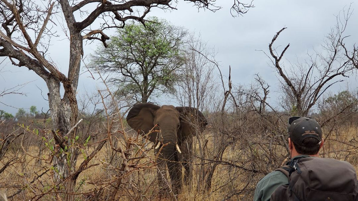 #GuestSafariReview : Jonas Loved Africa on Foot Wilderness Trails