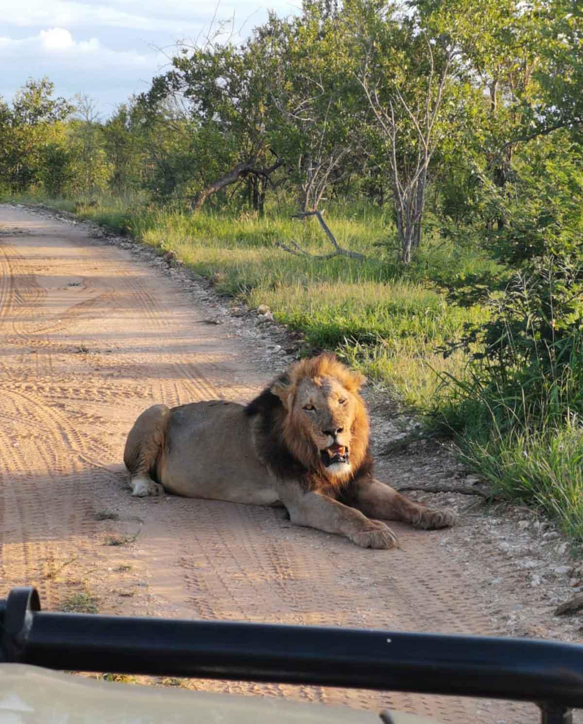 Maseke Lions at Chacma Bush Camp